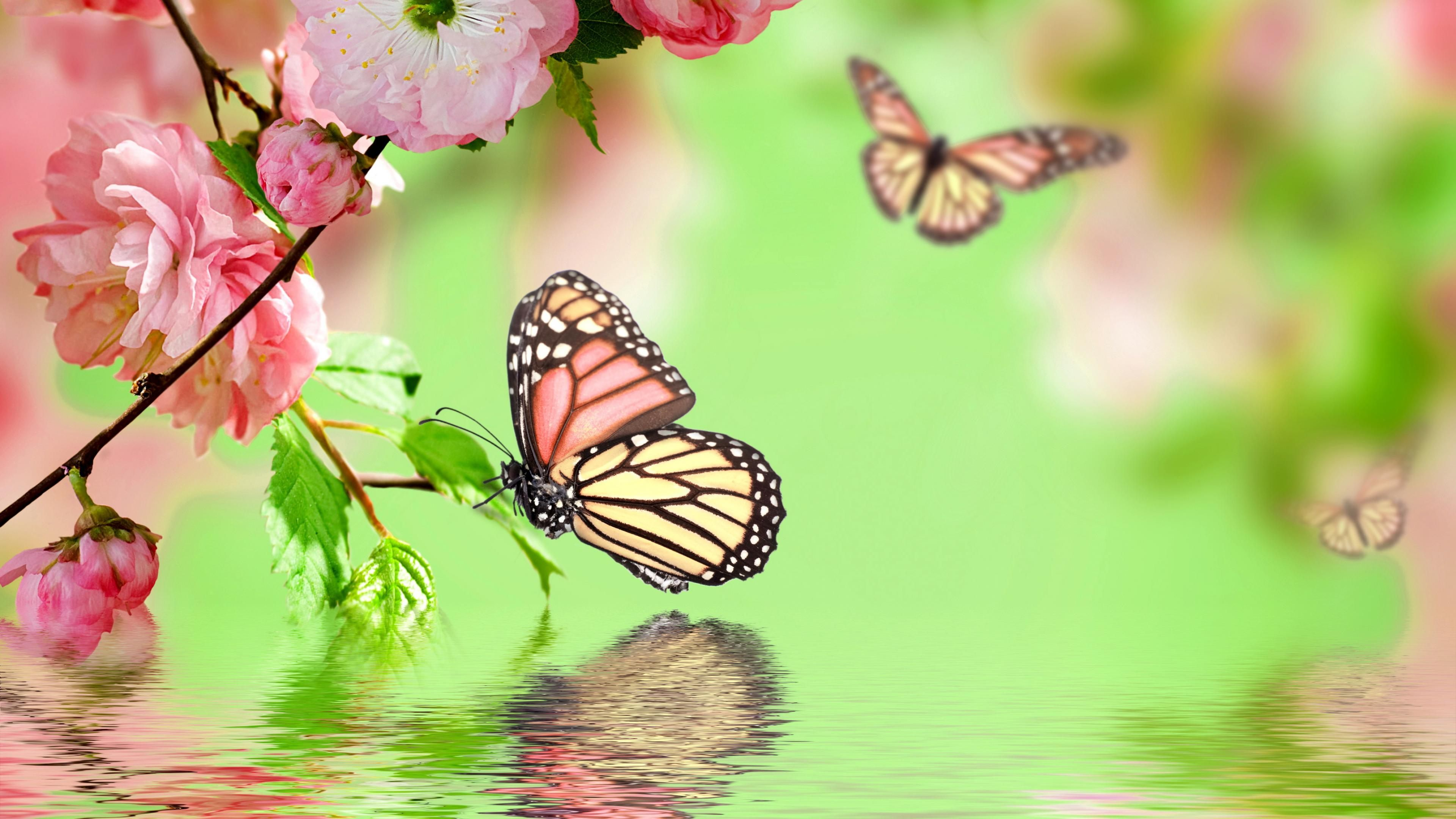 Wallpaper Butterfly