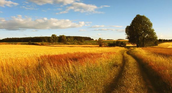 Download Wallpaper Country Scenes Gallery