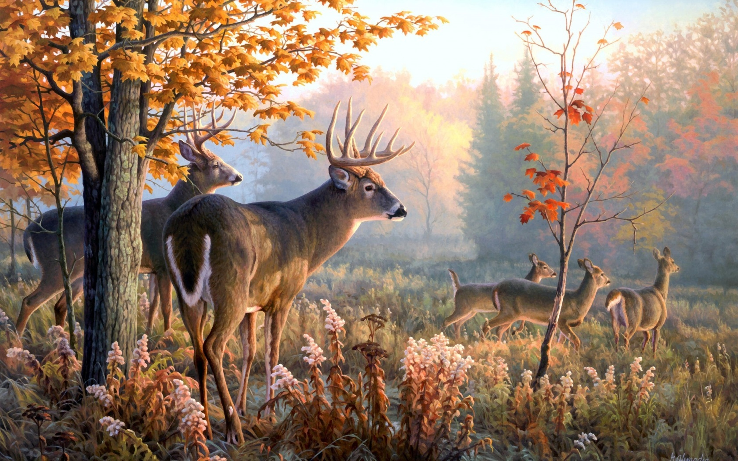 Wallpaper Deer