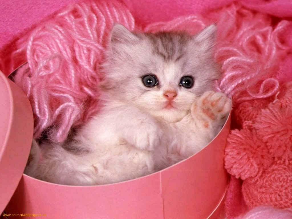 Wallpaper Download Cute