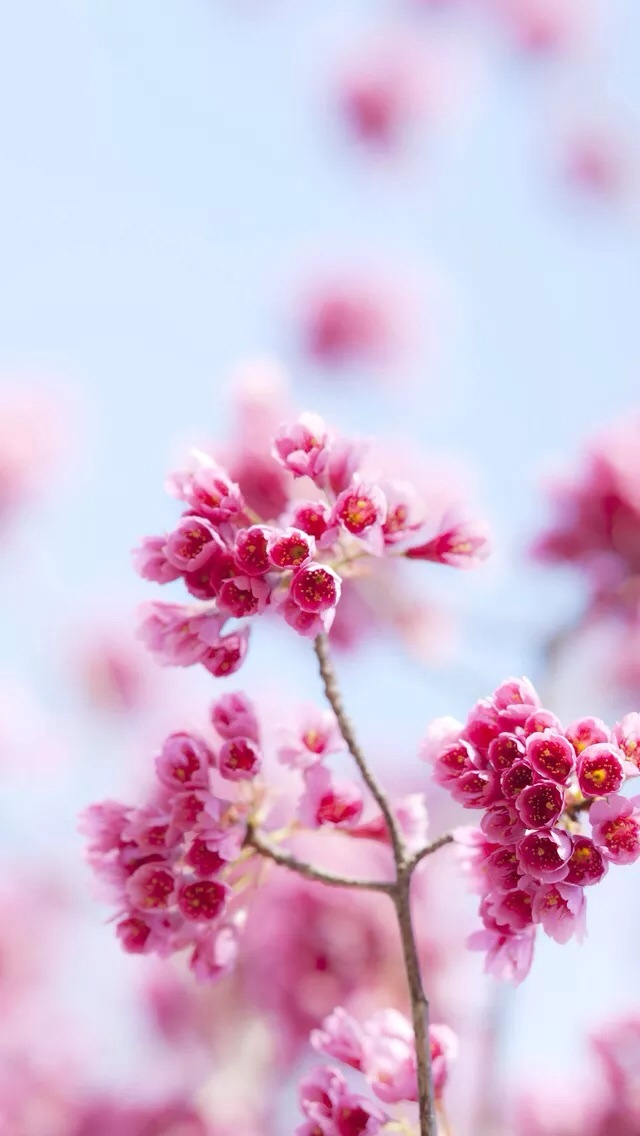 Download Wallpaper Flowers Iphone Gallery
