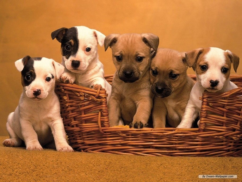 Wallpaper For Dogs Puppy