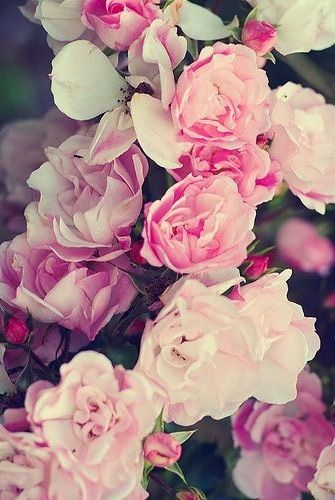 Wallpaper For Iphone Flowers