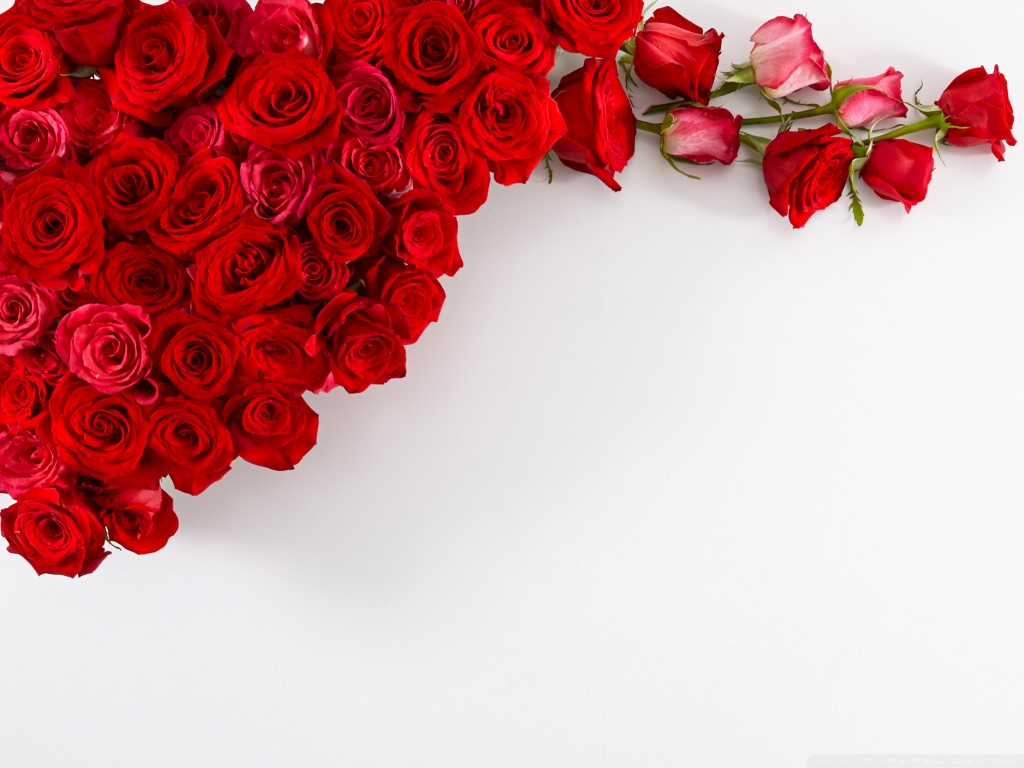 Wallpaper For Red Roses