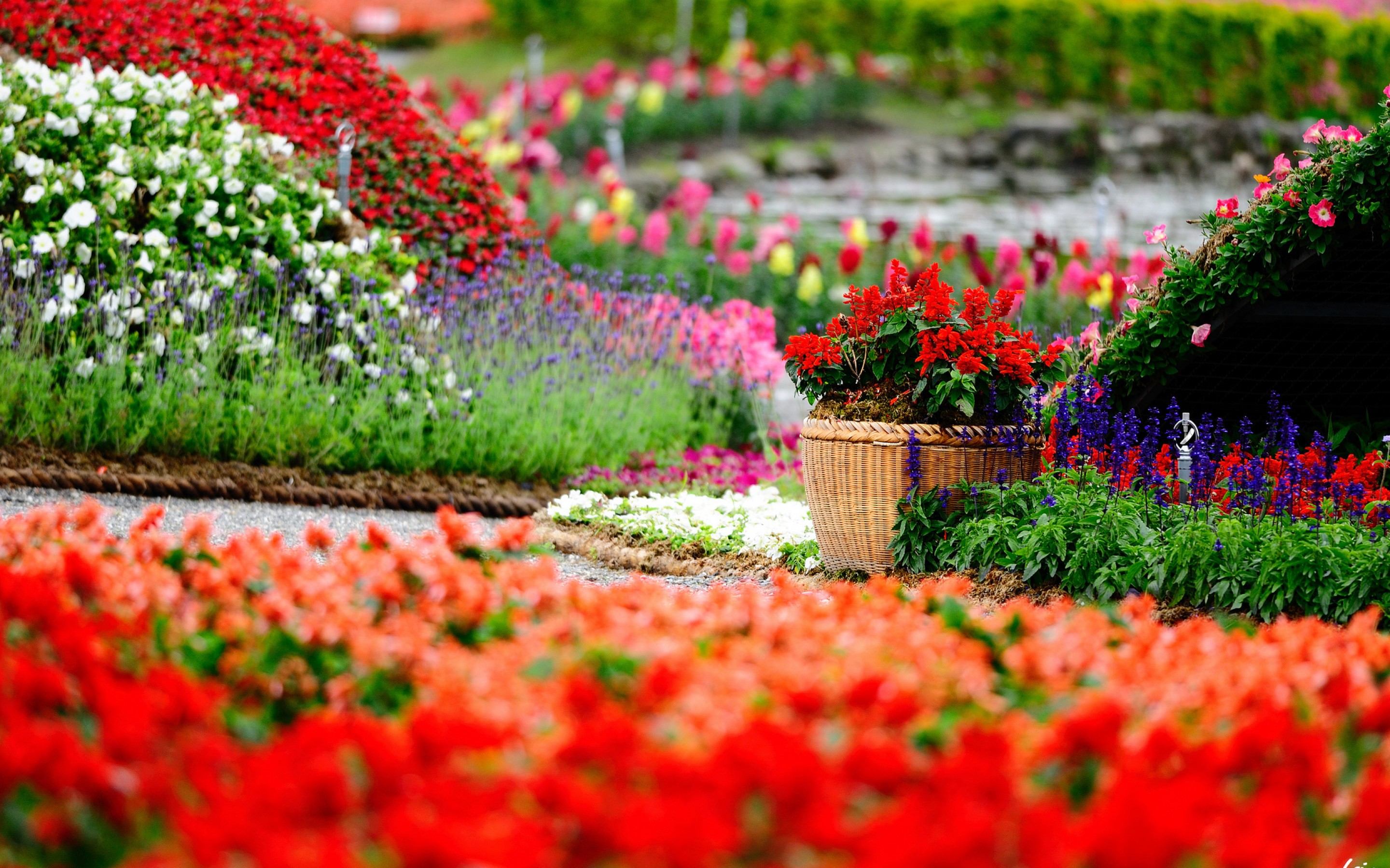 Wallpaper HD Flowers Garden