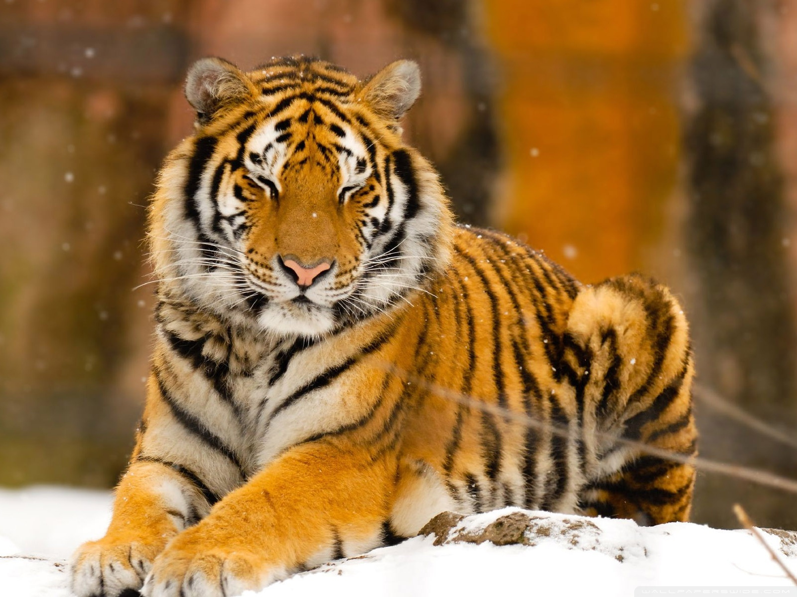 Wild Animals Names Hd Animals Wallpapers 4: Download Wallpaper HD Wild Animals Gallery