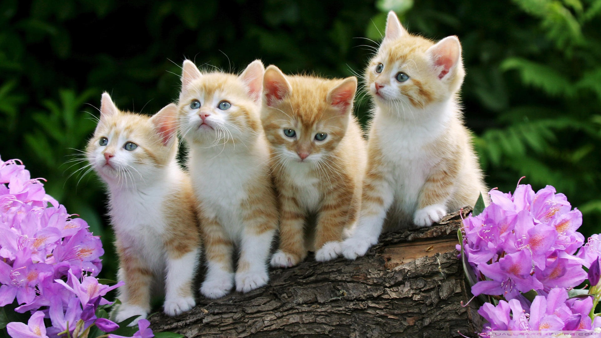 Wallpaper Kittens