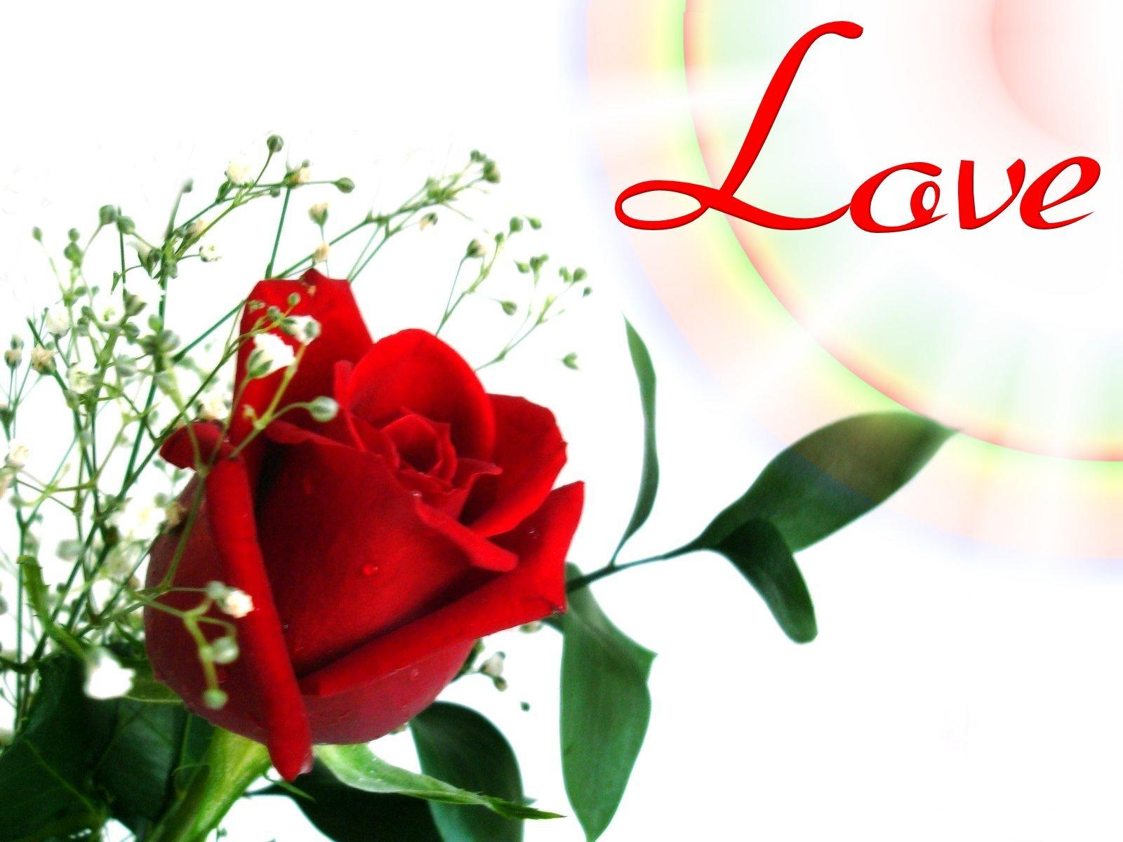 Wallpaper Love Flower