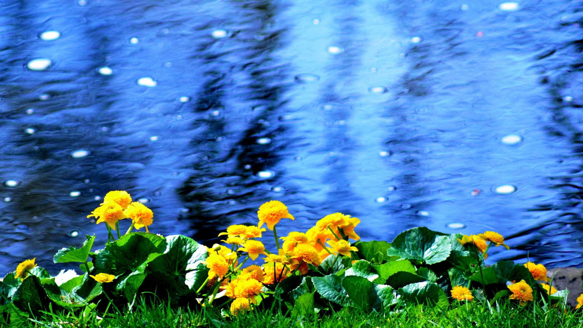 Wallpaper Nature Water