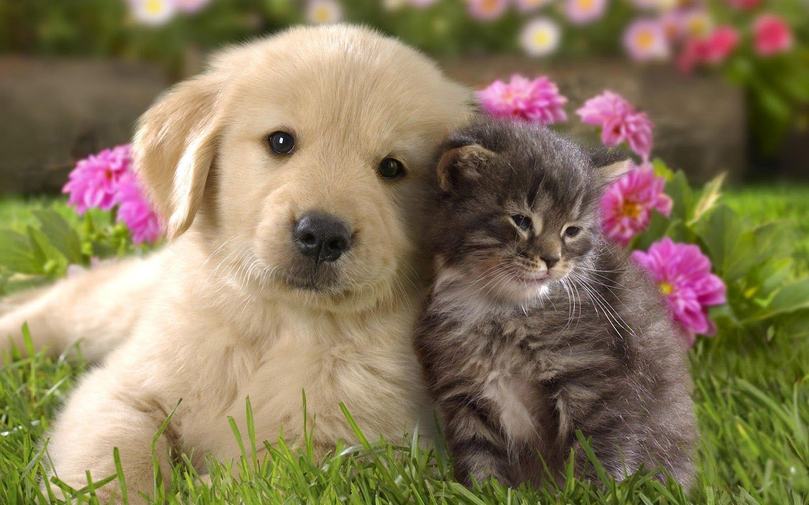 Wallpaper Of Cats And Dogs