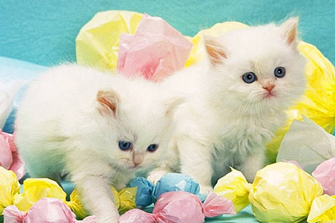Wallpaper Of Cats Free Download