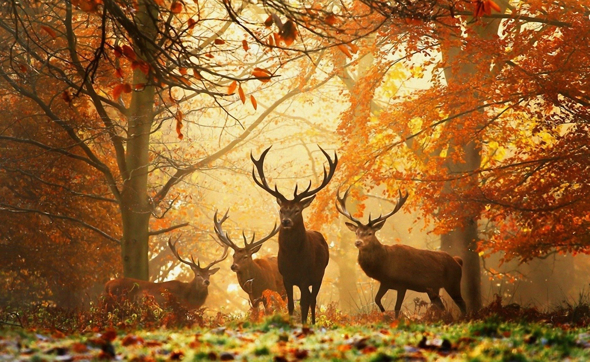 Wallpaper Of Deer