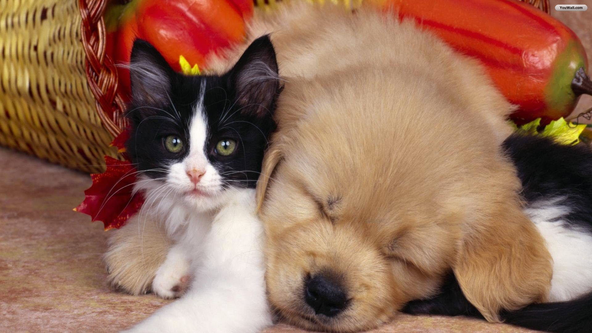 Wallpaper Of Dogs And Cats