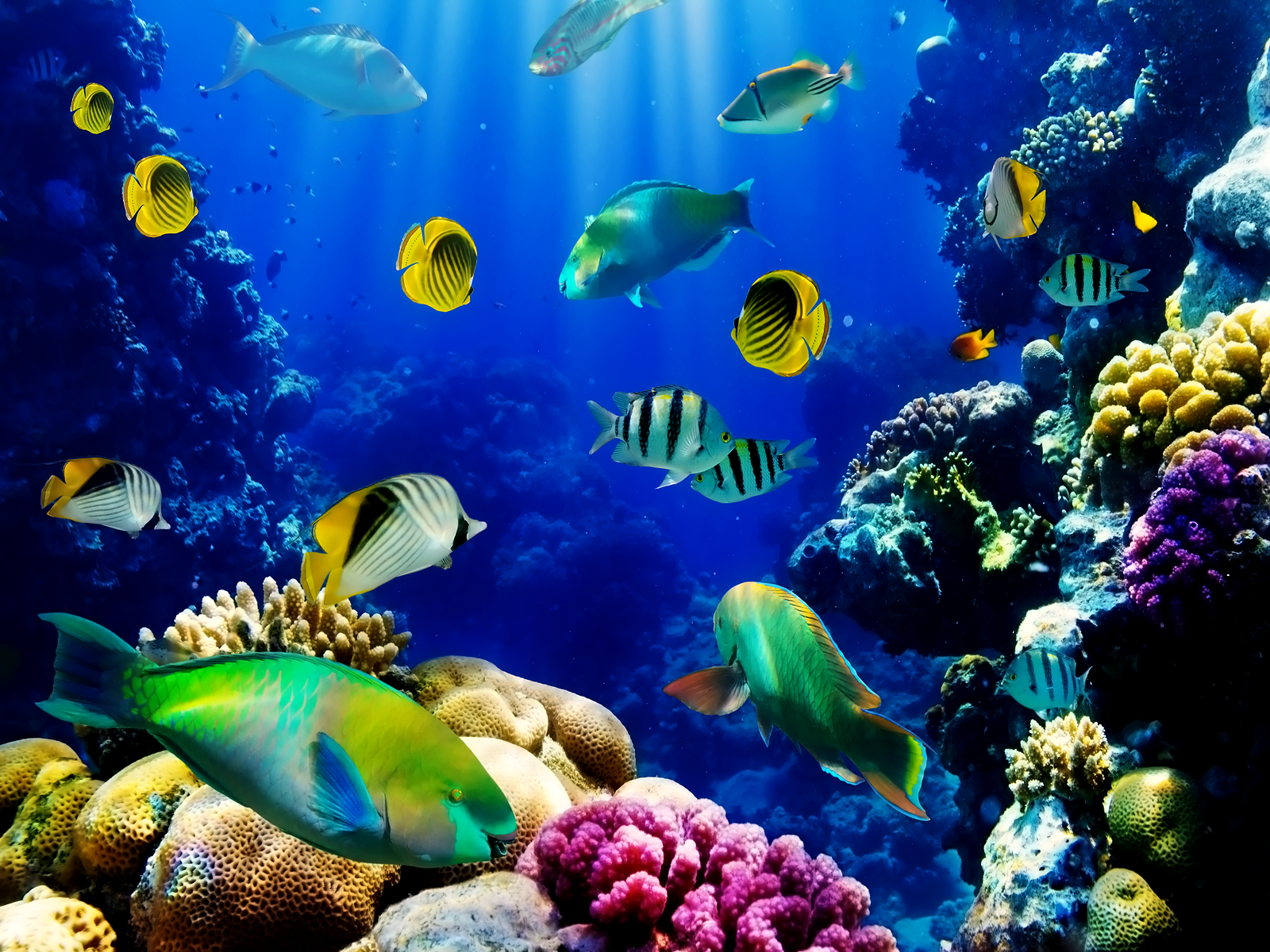 Wallpaper Of Fish Aquarium