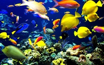 Wallpaper Of Fishes