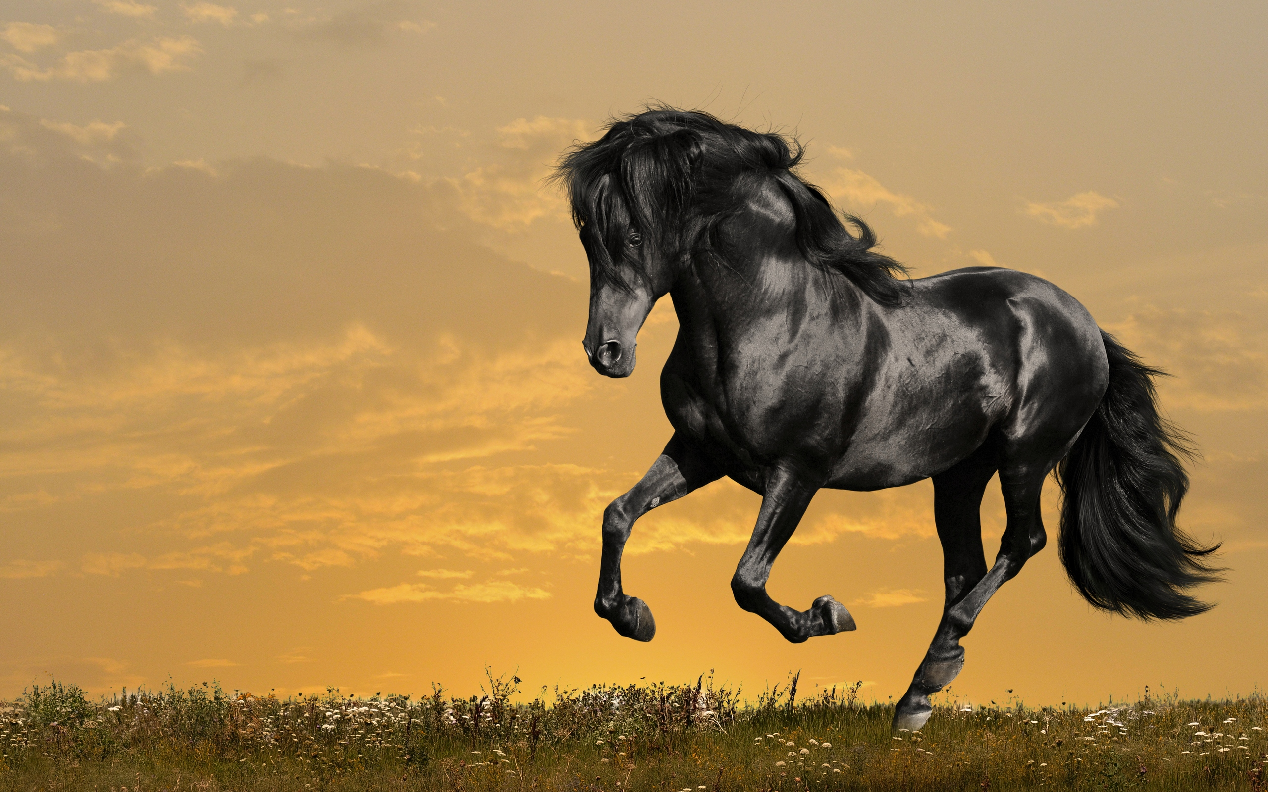 Wallpaper Of Horse