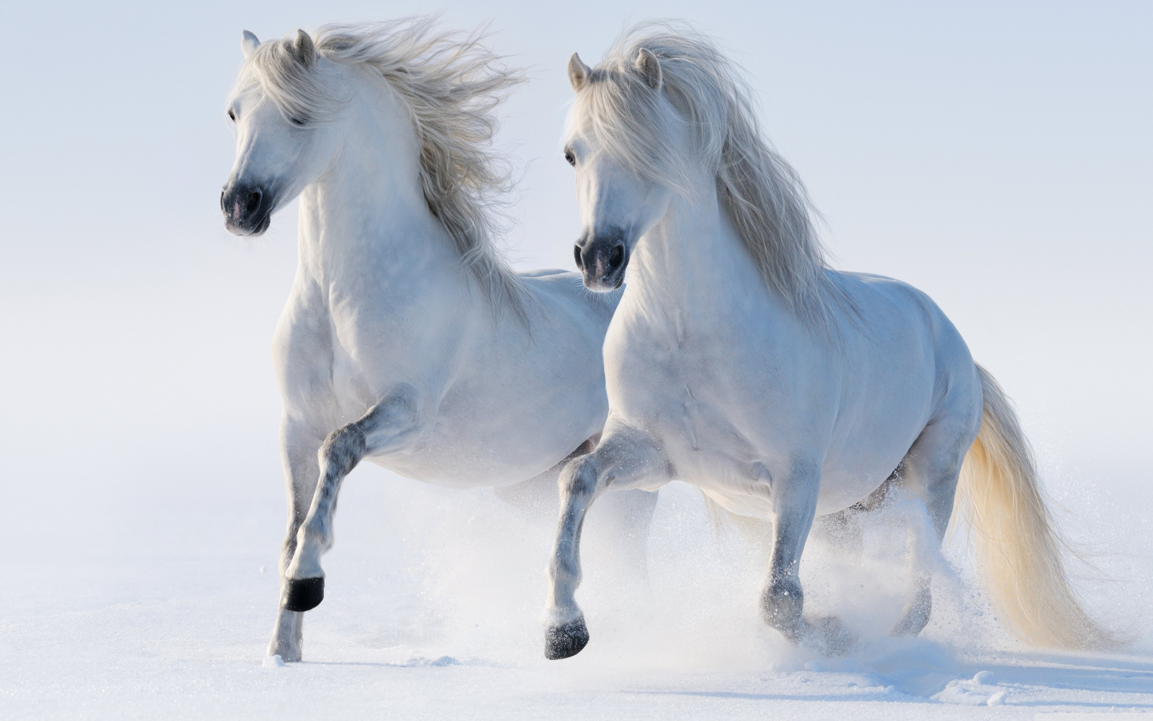Wallpaper Of Horses