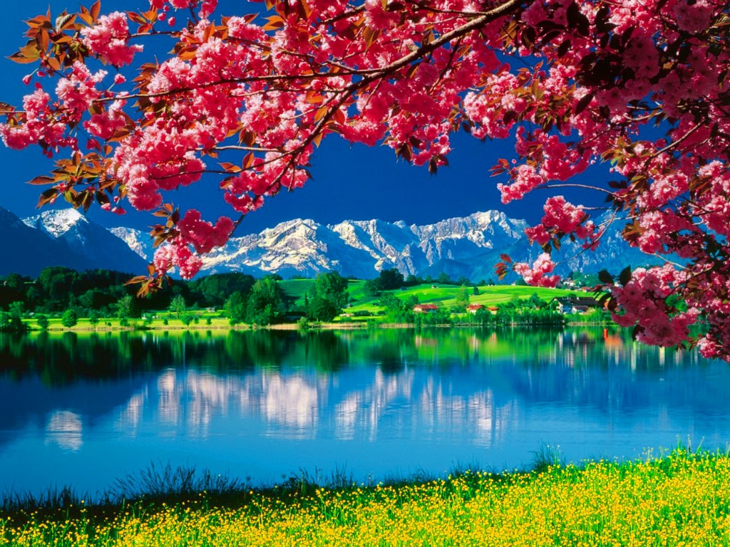 Wallpaper Of The Nature