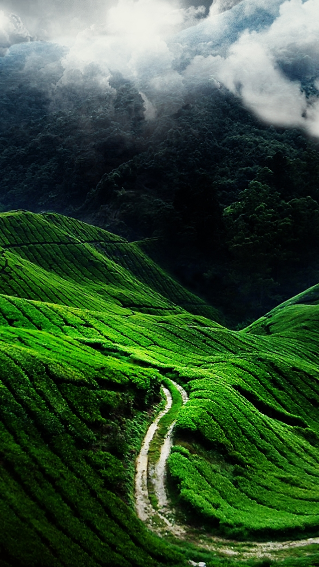 Wallpaper Phone Nature