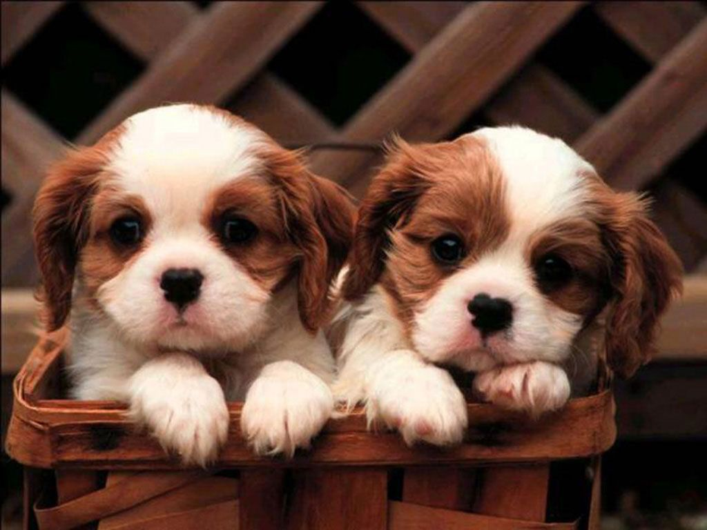 Wallpaper Puppies