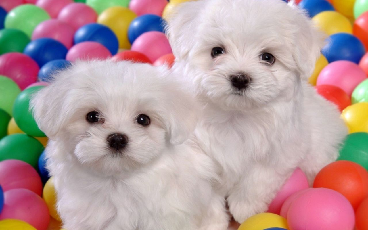 Wallpaper Puppy Dogs