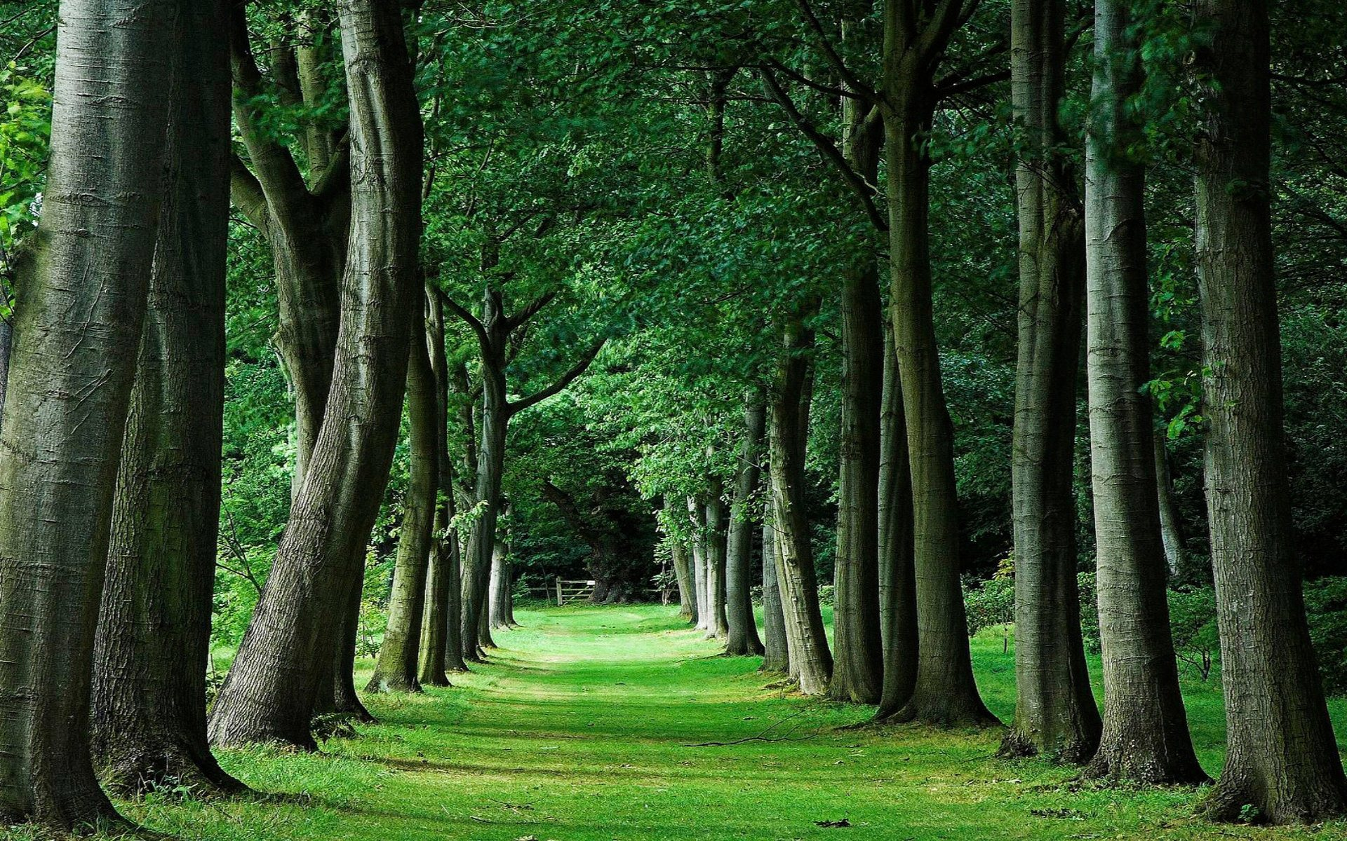 Wallpaper With Trees