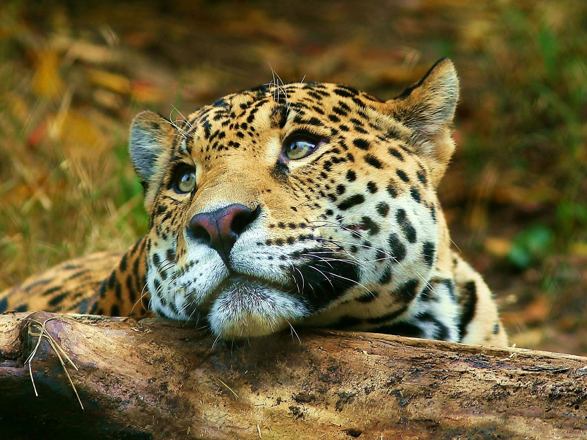 Wallpapers Animals