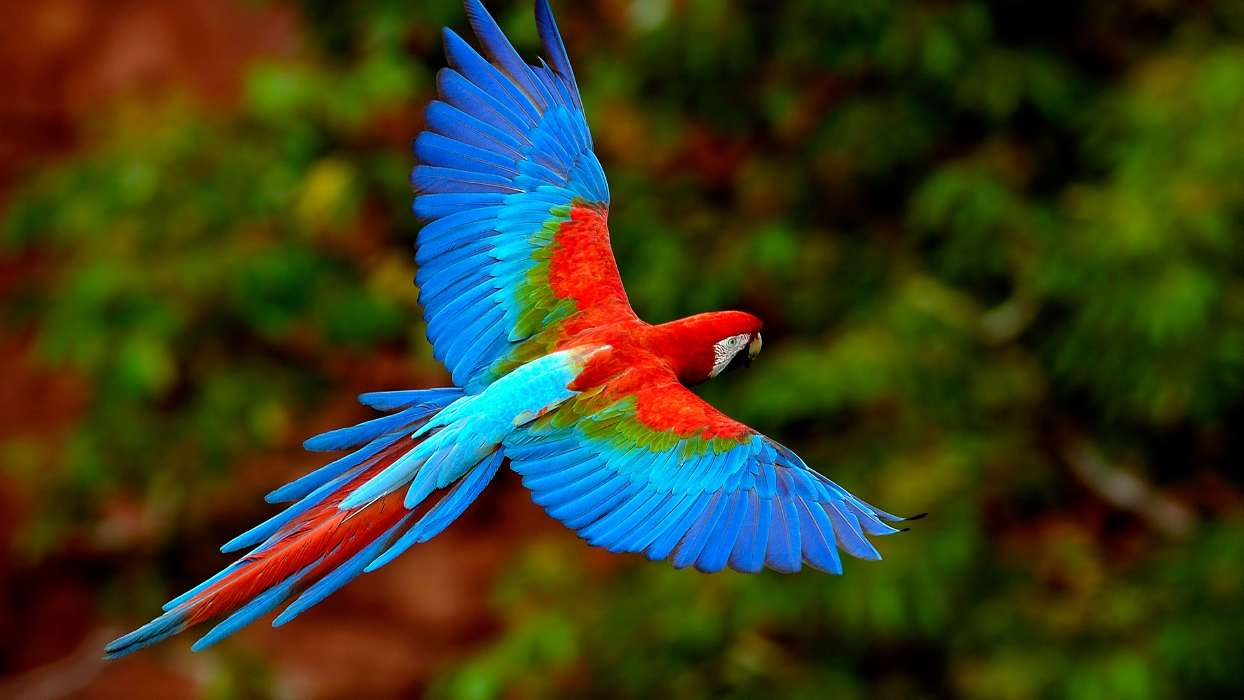 Wallpapers Animals Free