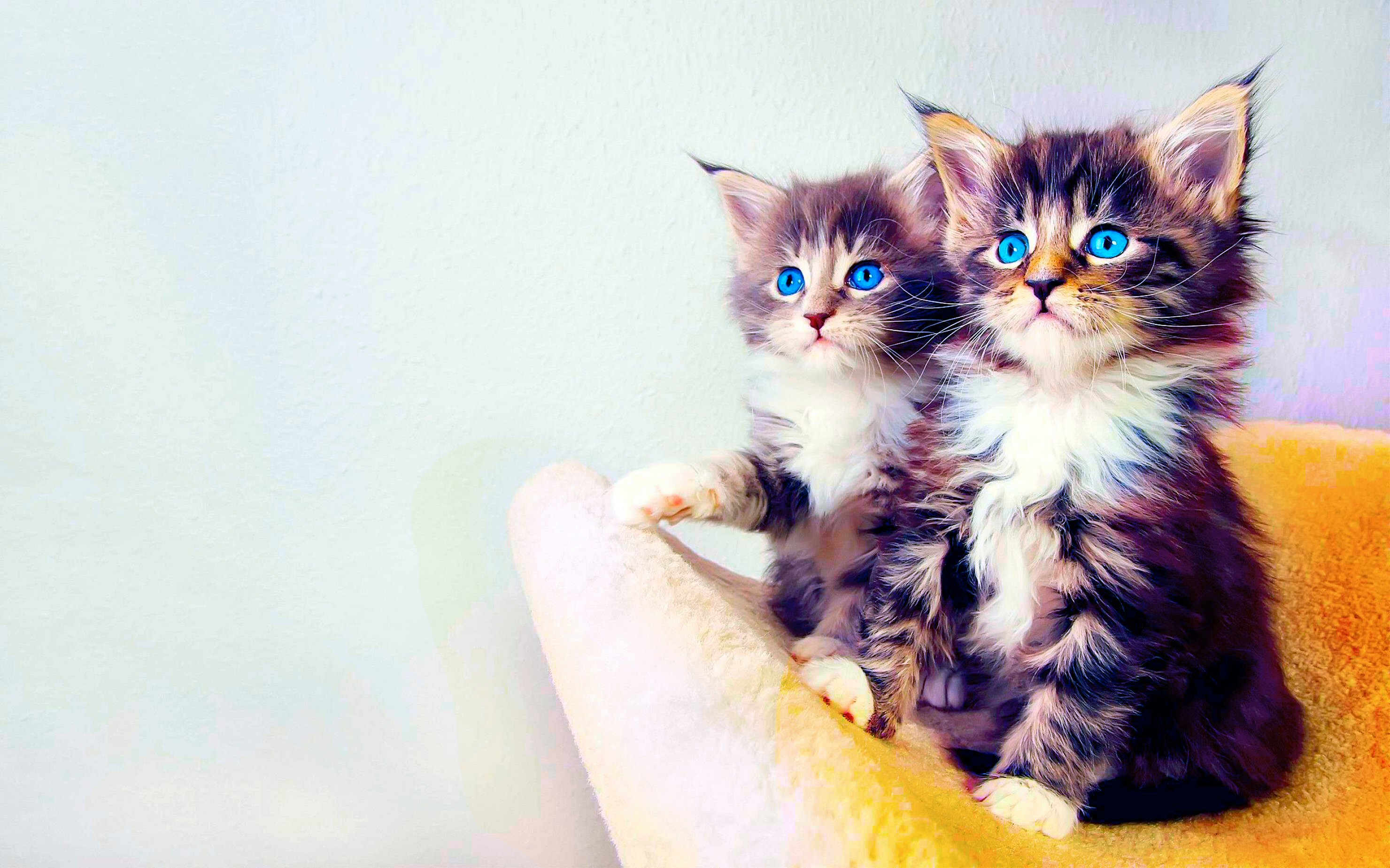 Wallpapers Cat