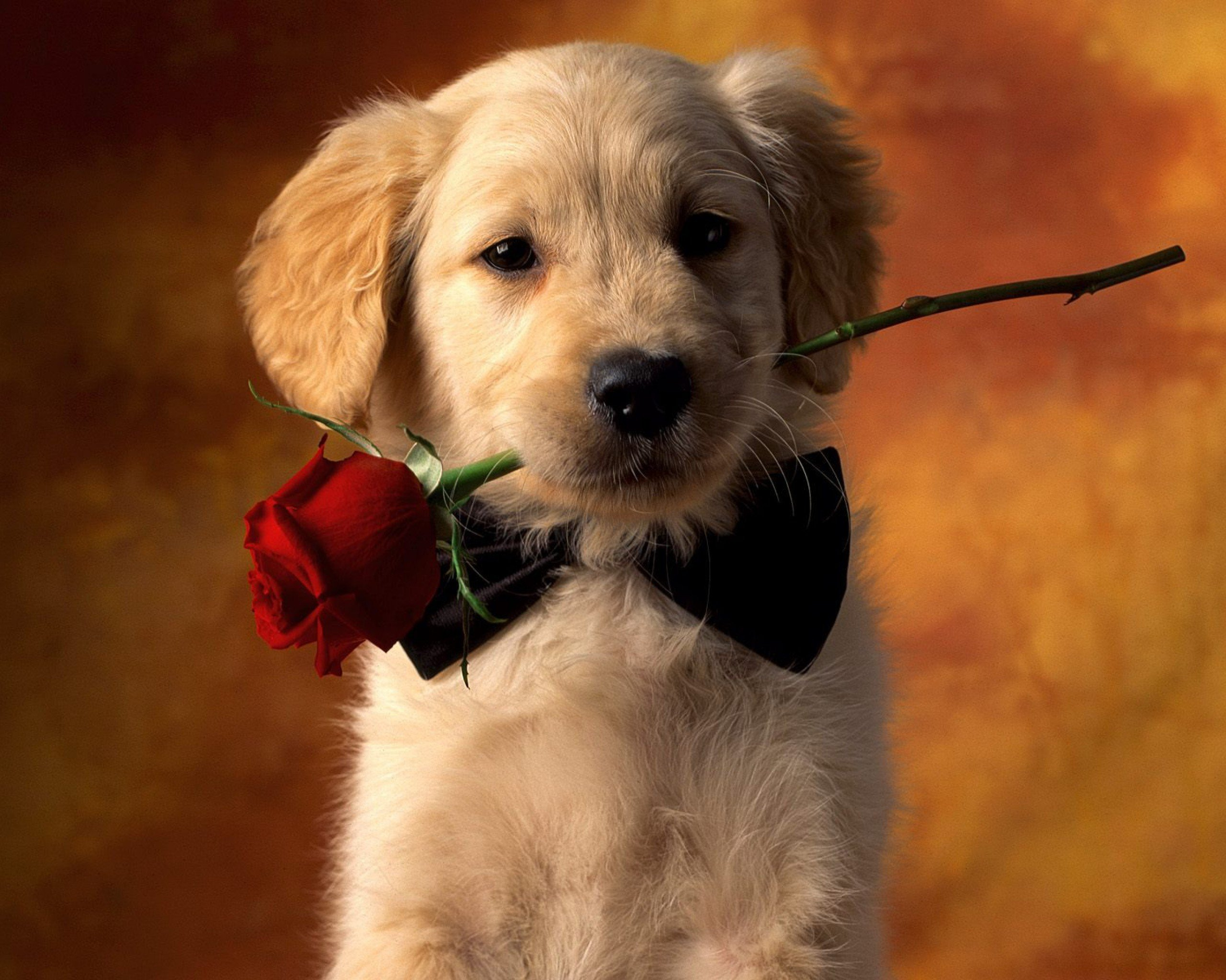 Wallpapers Dogs