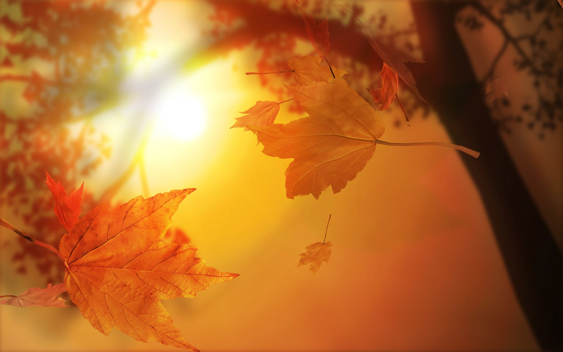 Wallpapers Fall