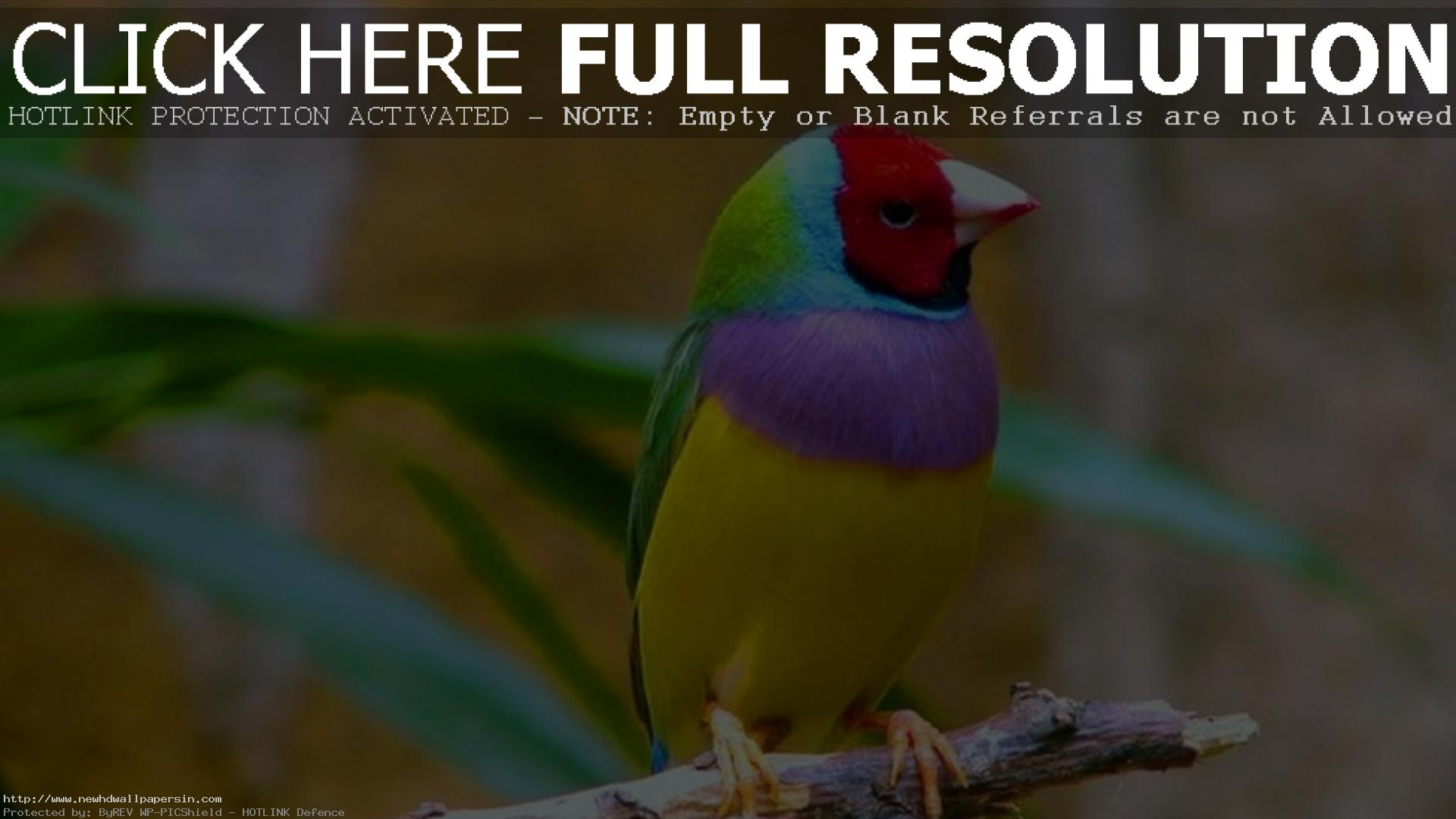 Wallpapers Of Birds Free Download
