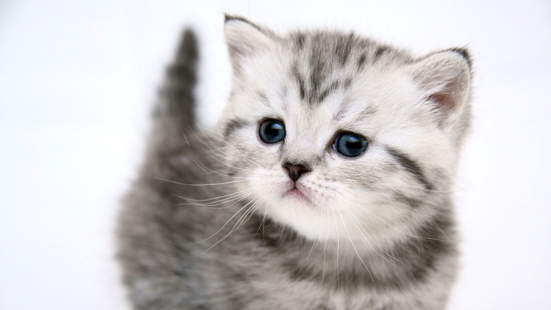 Wallpapers Of Cat