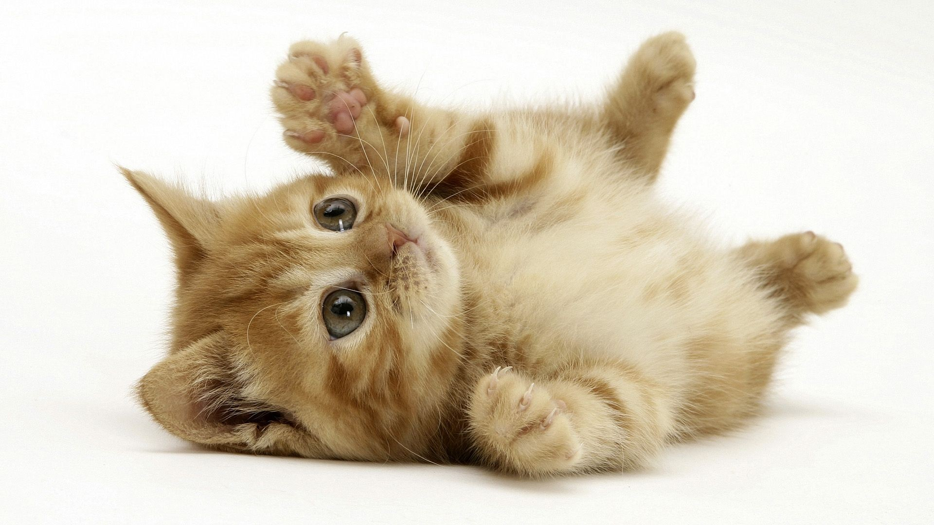 Wallpapers Of Cats