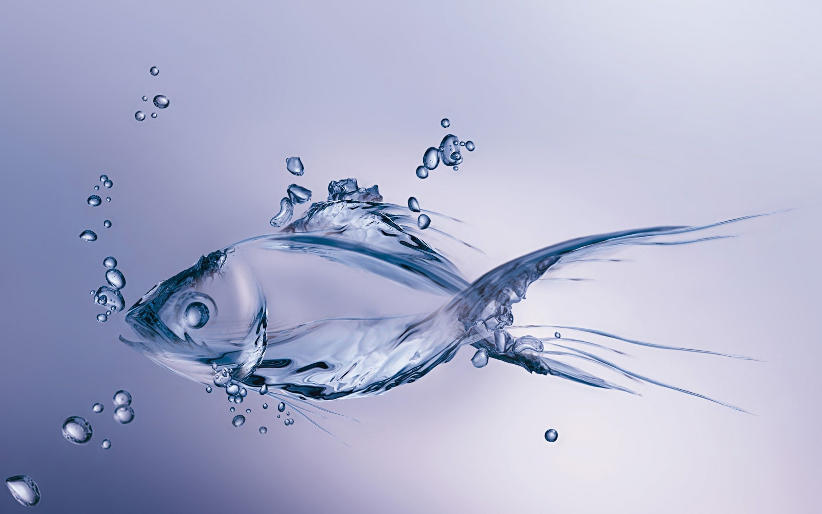 Wallpapers Of Fishes