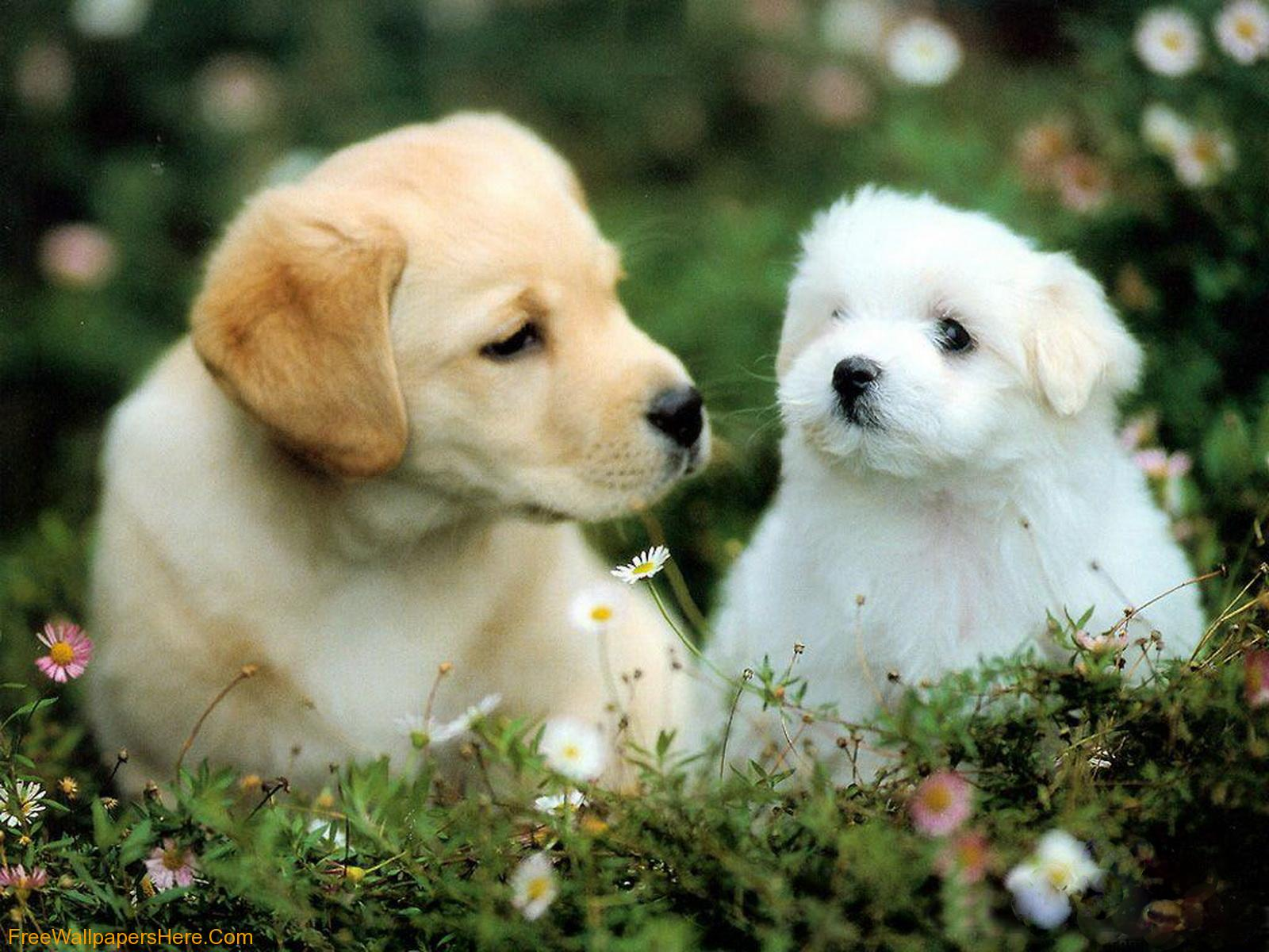 Wallpapers Of Puppies