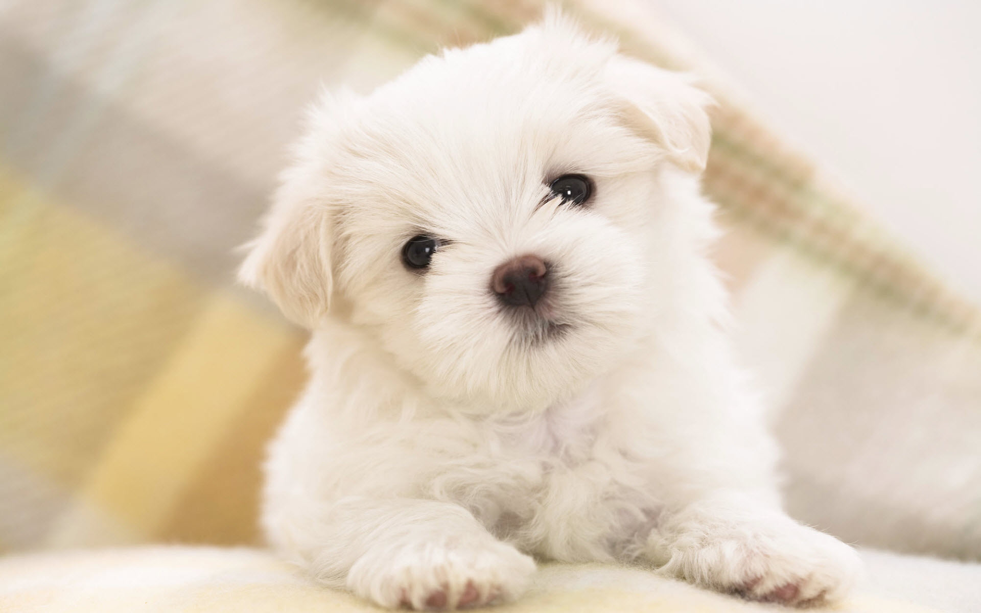 Wallpapers Puppies