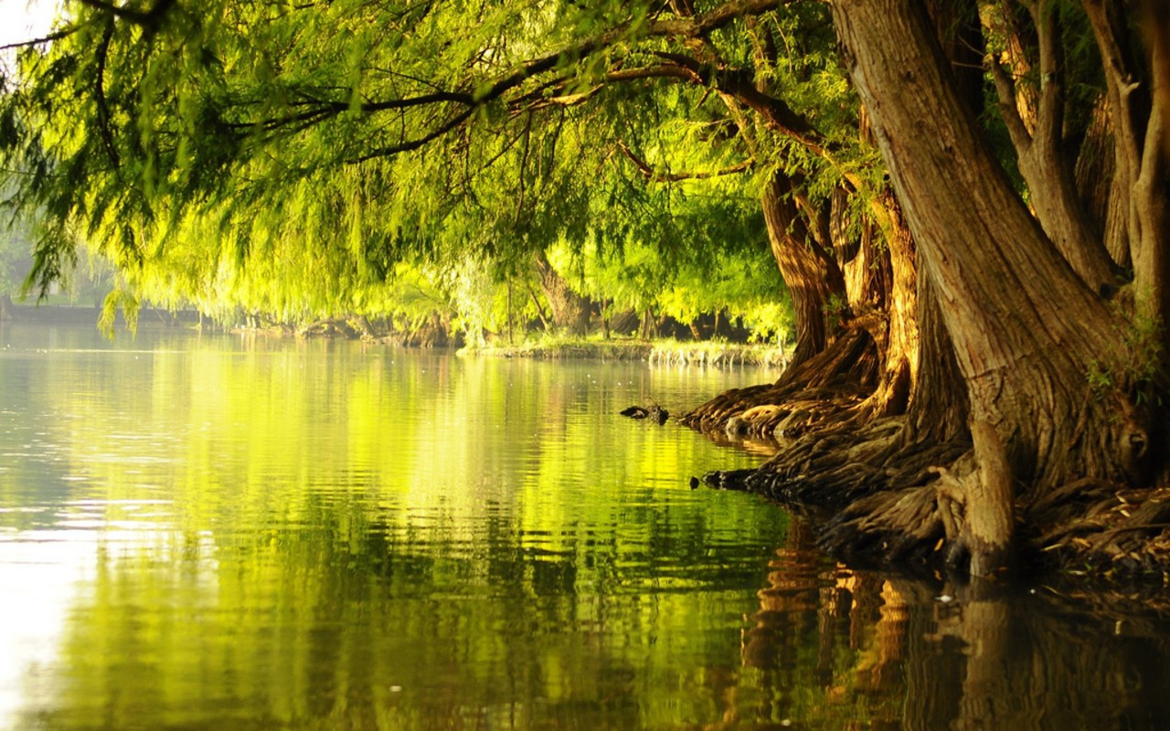 Water Tree Wallpaper