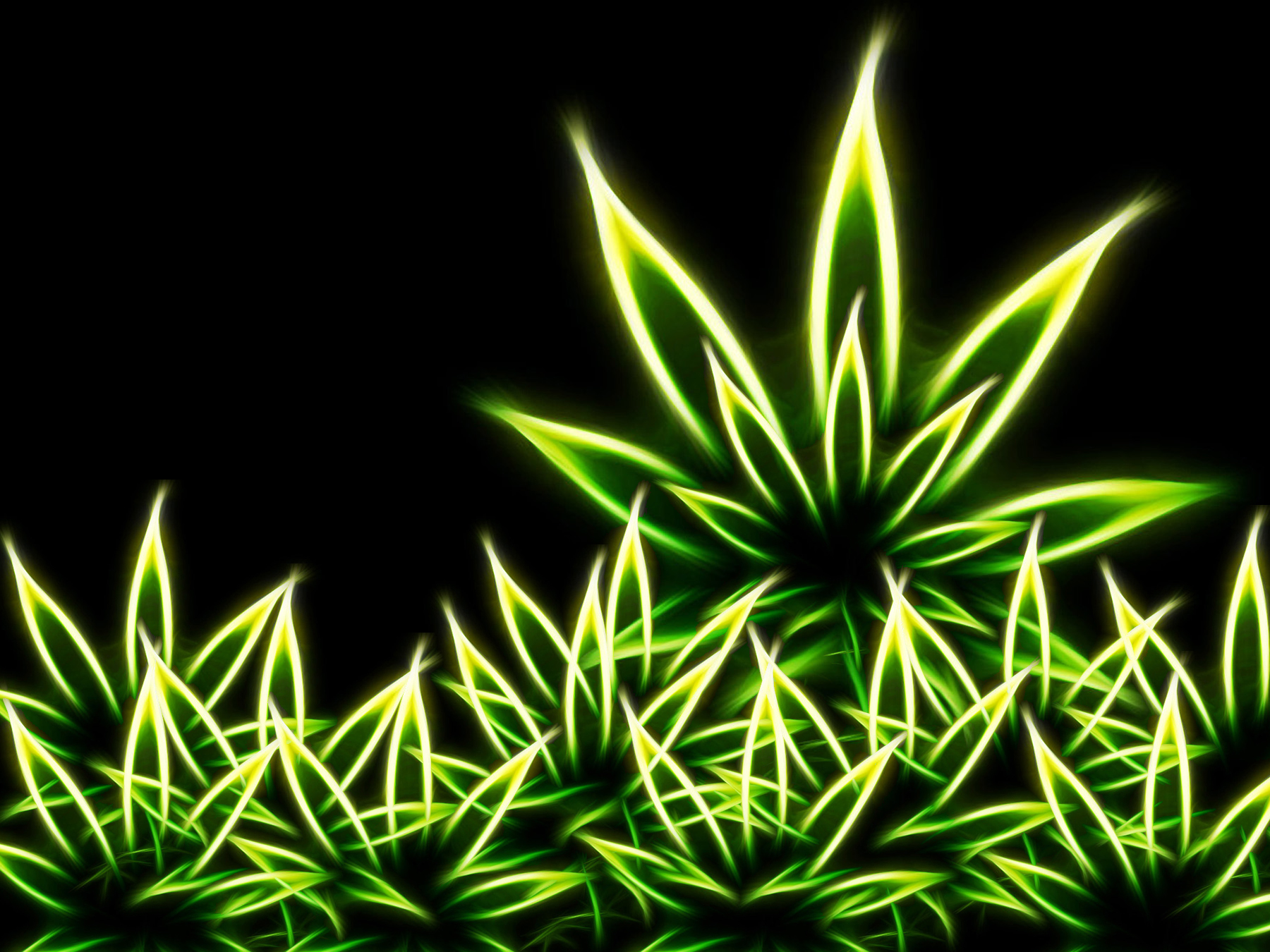 Weed Plant Wallpaper