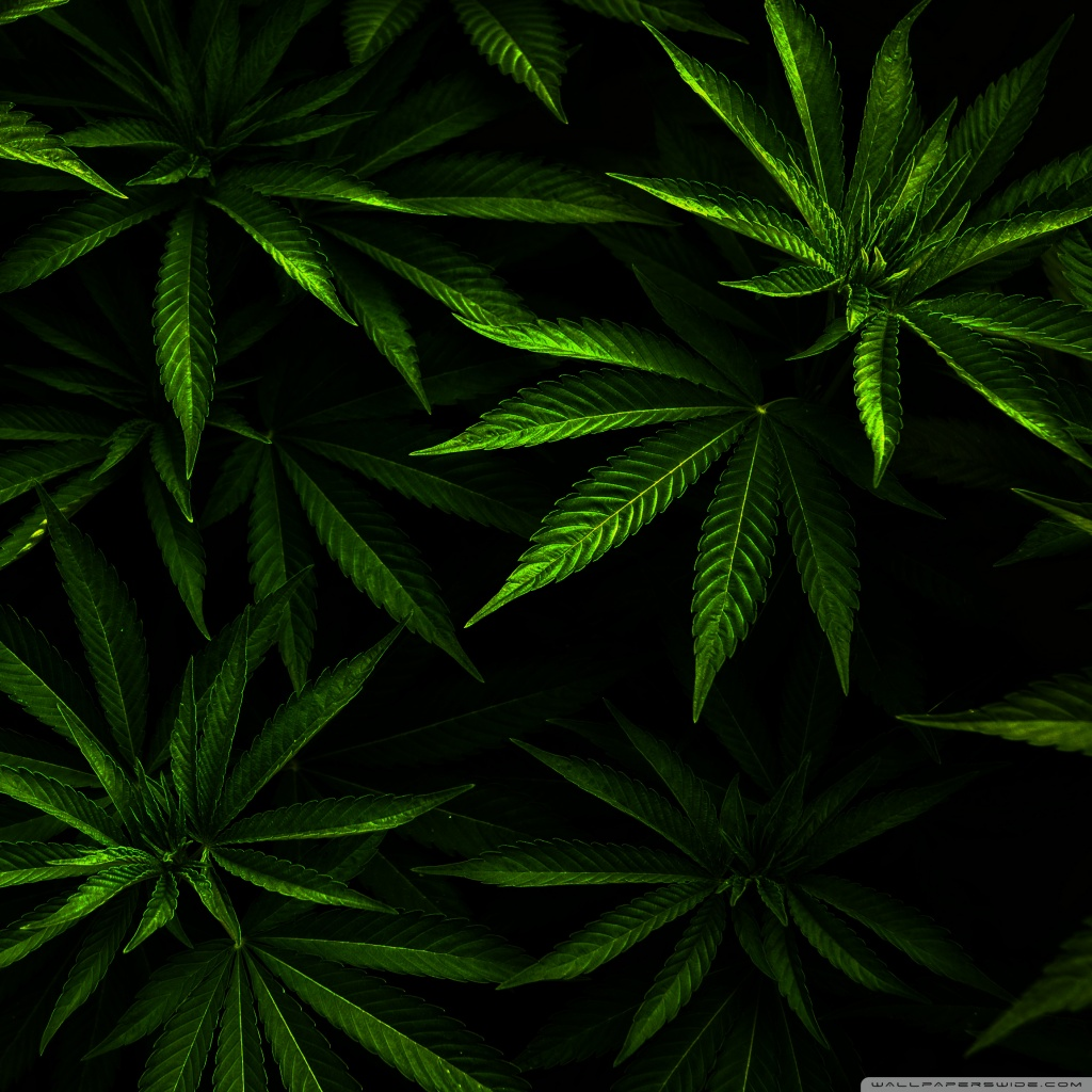 Download Weed Wallpapers For Android Gallery