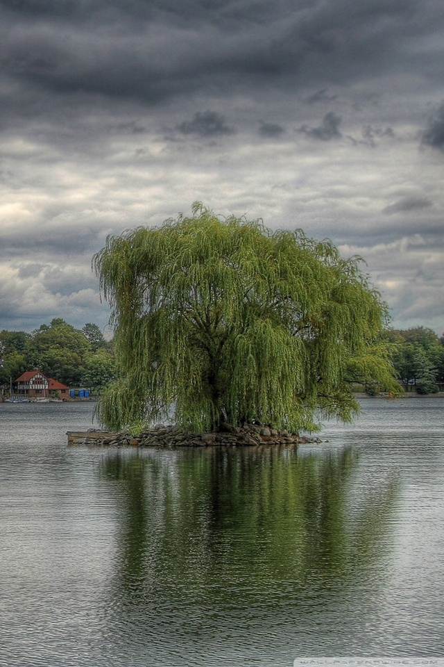 Download Weeping Willow Tree Wallpaper Gallery