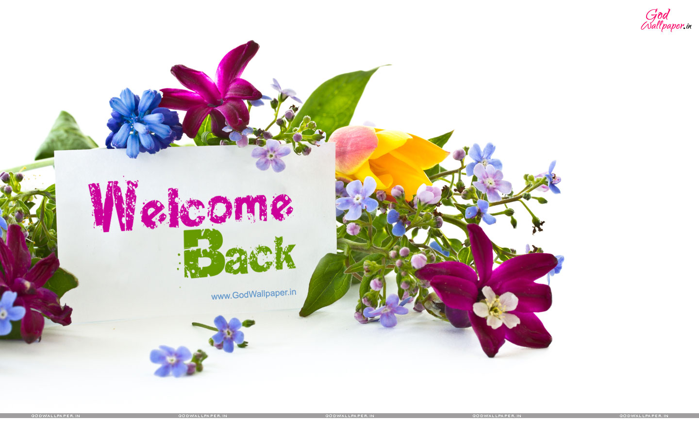 Welcome-Back-Wallpaper.jpg