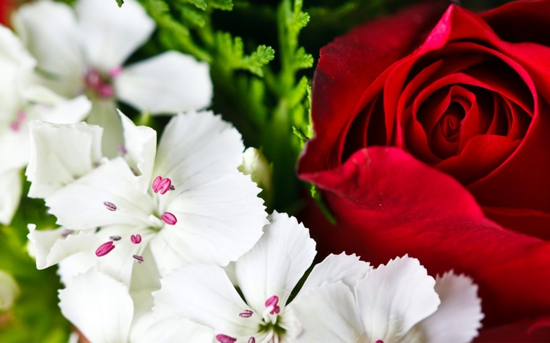White And Red Flower Wallpaper