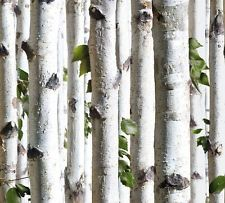 White Birch Wallpaper