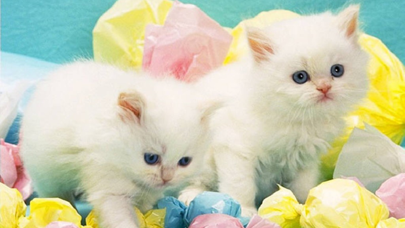 White Cat Wallpapers