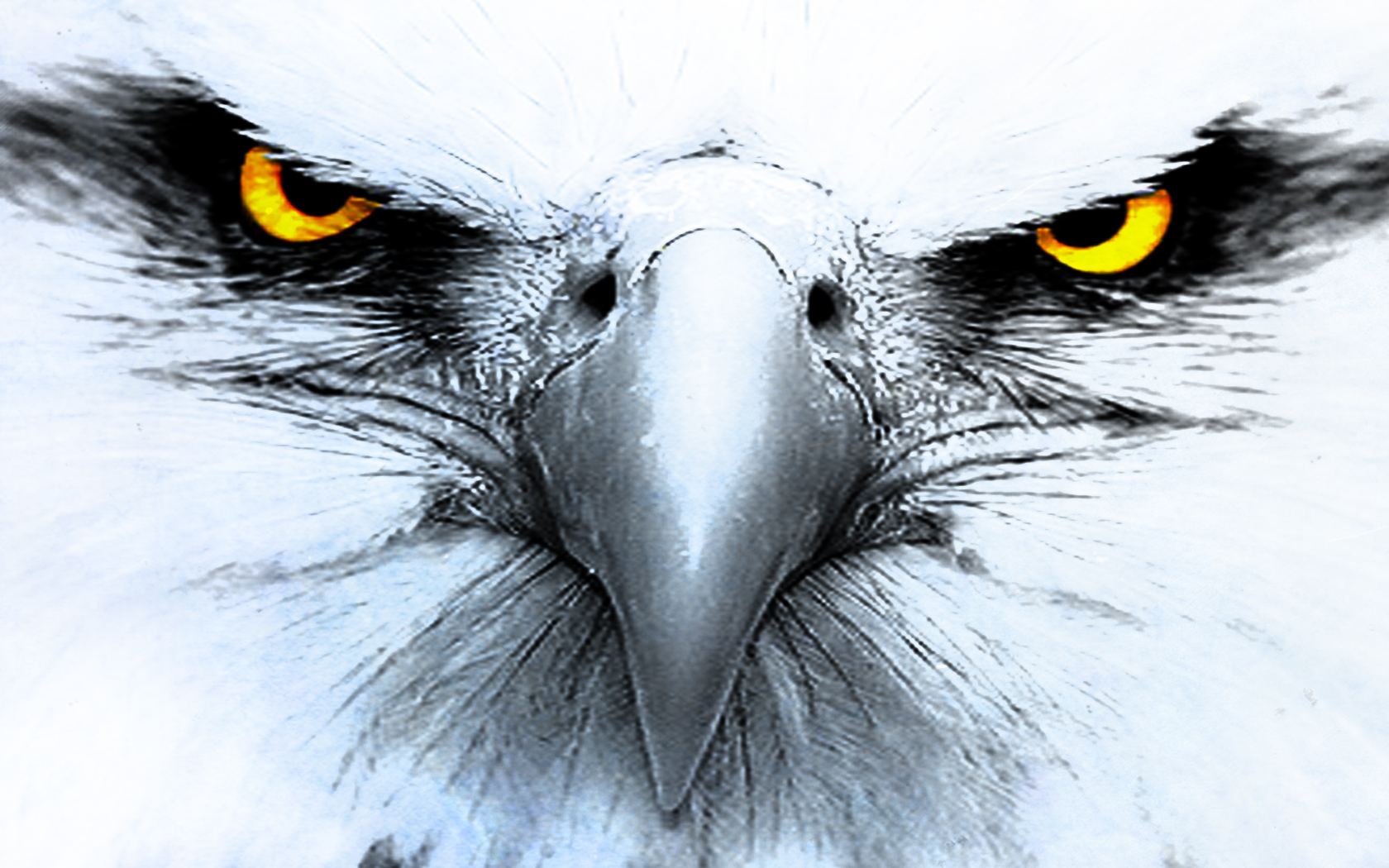 White Eagle Wallpaper