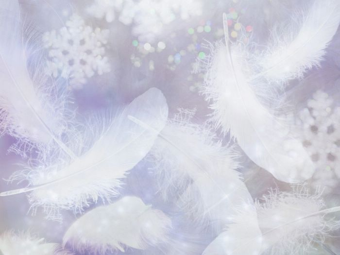 Download White Feather Wallpaper Gallery