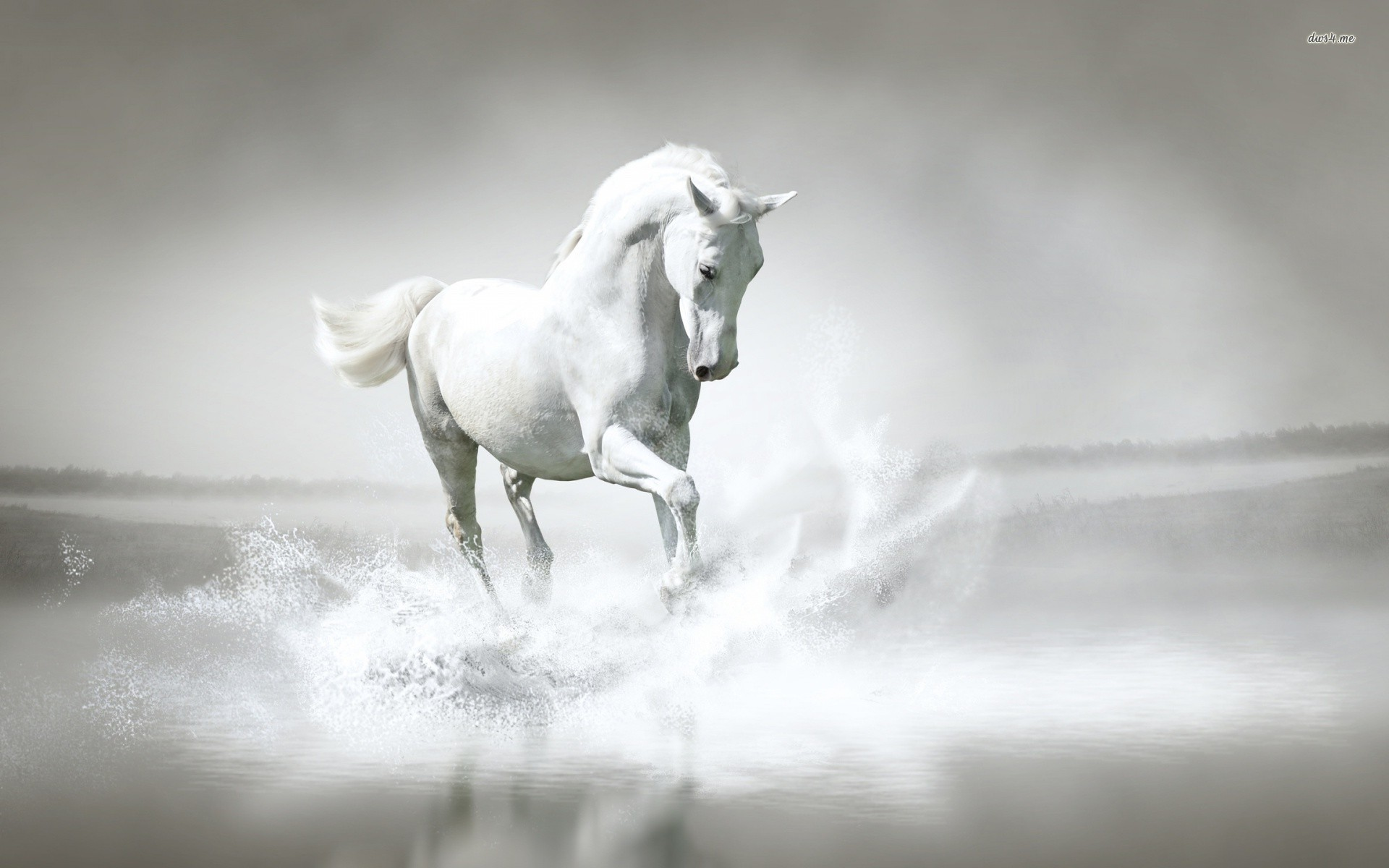 Download White Horse 3d Wallpaper Gallery