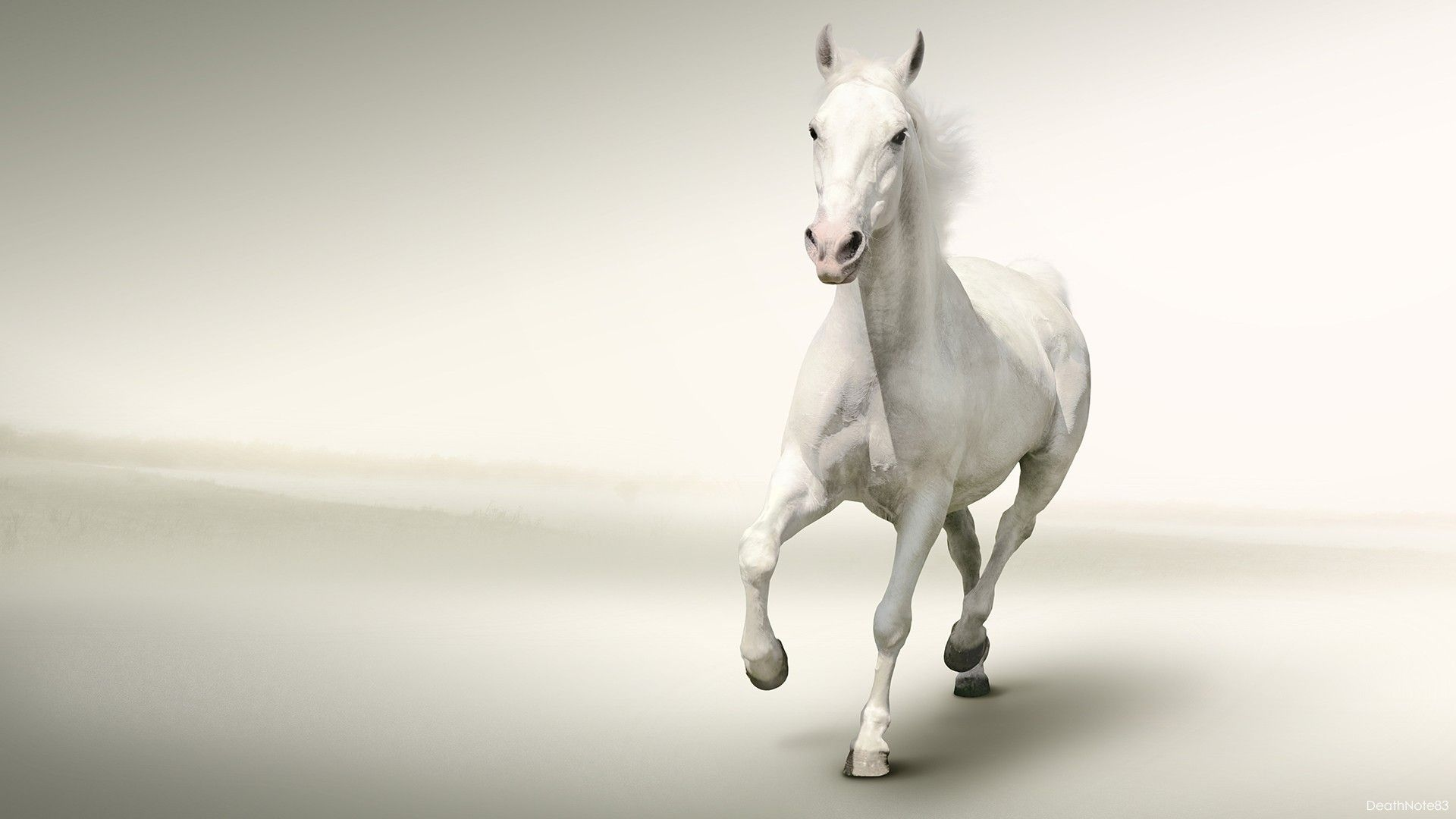 Download White Horse Wallpaper Gallery