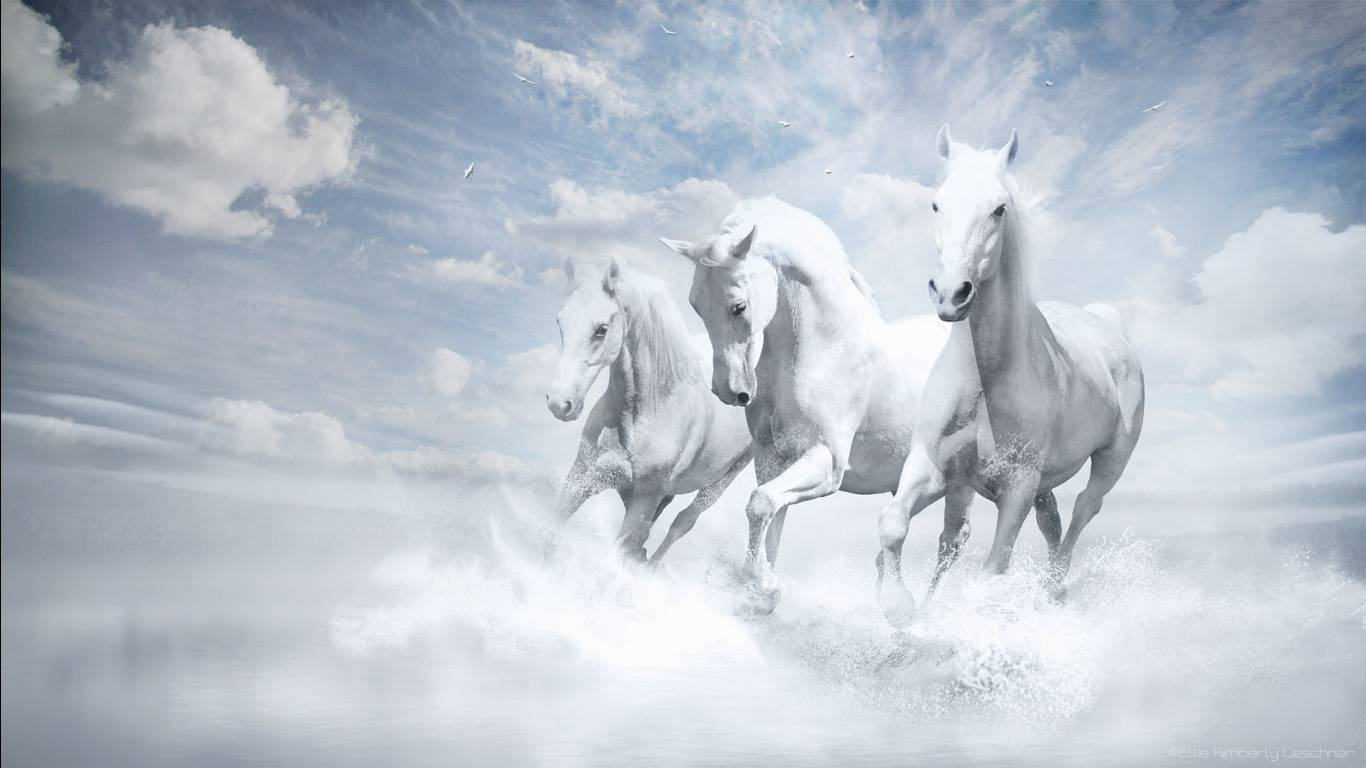 White Horses Running Wallpaper